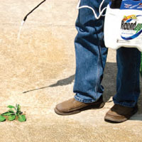 Roundup - Weed & Grass Control